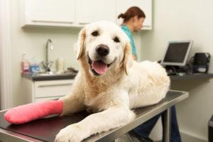 Hirudoterapia zwierząt